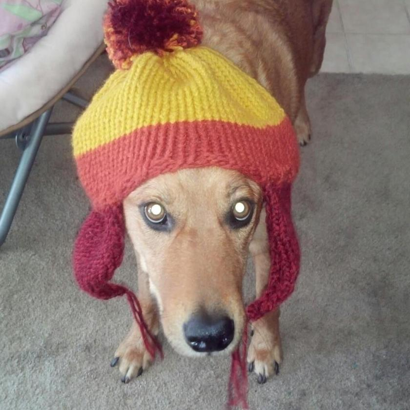Picture of Rocky in his hat