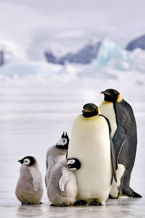 Happy World PenguinDay!